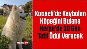 Kocaeli'de Kaybolan Köpeğini Bulana Kerpe'de 10 Gün Tatil Ödül Verecek