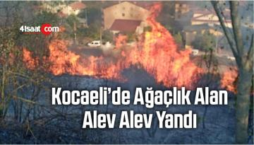 Kocaeli'nin Derince ilçesinde Ağaçlık Alan Alev Alev Yandı