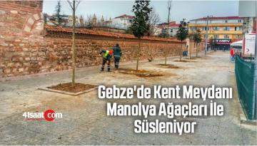 Gebze'de Kent Meydanı Manolya Ağaçları İle Süsleniyor