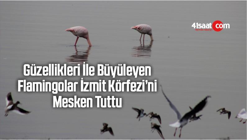 Güzellikleri İle Büyüleyen Flamingolar İzmit Körfezi'ni Mesken Tuttu