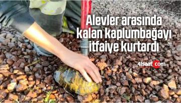 Alevler Arasında Kalan Kaplumbağayı İtfaiye Kurtardı