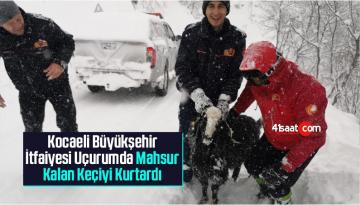 Kocaeli Büyükşehir İtfaiyesi Uçurumda Mahsur Kalan Keçiyi Kurtardı
