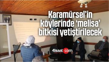 Karamürsel'in Köylerinde 'Melisa' Bitkisi Yetiştirilecek
