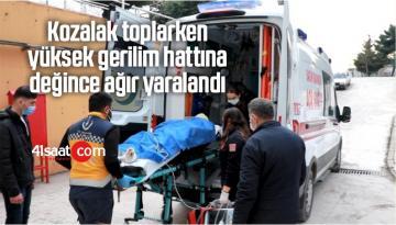 Kozalak Toplarken Yüksek Gerilim Hattına Değince Ağır Yaralandı