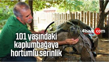 101 Yaşındaki Kaplumbağaya Hortumlu Serinlik