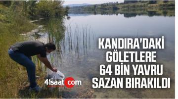 Kandıra'daki Göletlere 64 Bin Yavru Sazan Bırakıldı