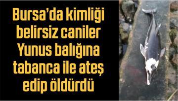 Bursa'da kimliği belirsiz caniler Yunus balığına tabanca ile ateş edip öldürdü