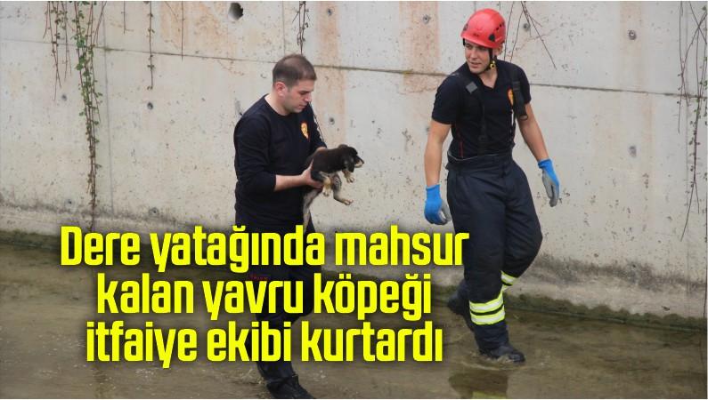 Dere yatağında mahsur kalan yavru köpeği itfaiye grubu kurtardı